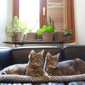 Nia et Miette