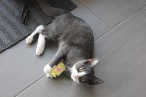 Nouky-Mila